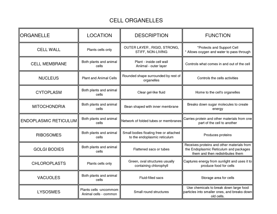 worksheet Prokaryotes Vs Eukaryotes Worksheet Luizah Worksheet – Gene Expression Worksheet